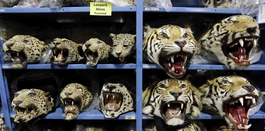 animales exóticos en China