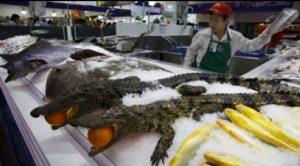 La cría y el consumo de animales exóticos continúa en China.