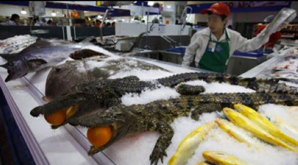 Lee más sobre el artículo La cría y el consumo de animales exóticos continúa en China.